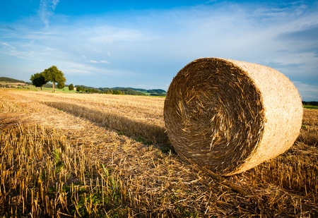 Hay Bale on a harvested Field on late Afternoon