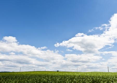Línea eléctrica en un campo con horizonte de baja Foto de archivo - 13549292