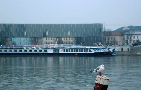 linz: Impression of Linz at Winter with Seagul in the foreground