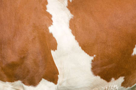 Texture of a mottled Simmental Cow Stock Photo - 17187741