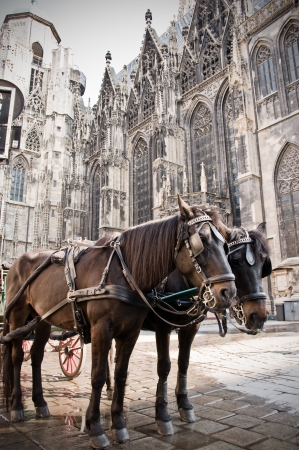horse and carriage: Coach in Vienna