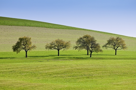 horizon over land: Trees on a Meadow in a Row