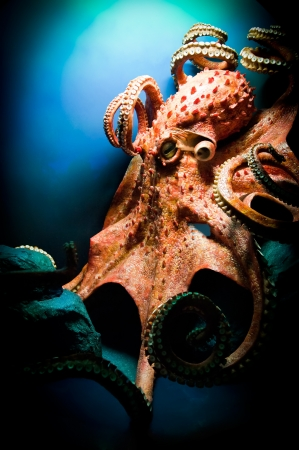 pulpo: Scary Giant Octopus
