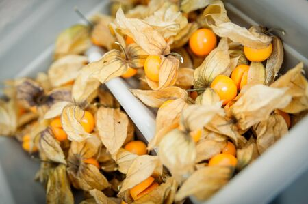 physalis: Lot of opened physalis in a basket Stock Photo