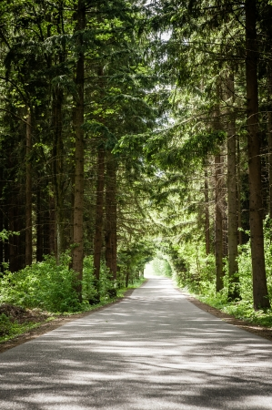 Forest road in the summer photo