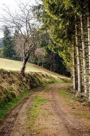 upper austria: Footpath in Upper Austria trough the Countryside