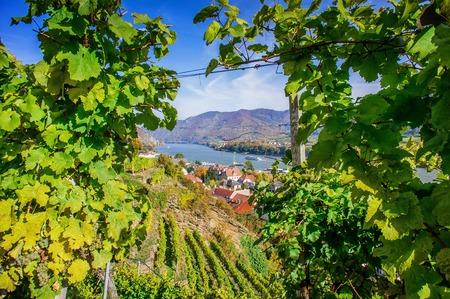 Natuurlijk frame in een wijngaard die in Spitz, Neder-Oostenrijk