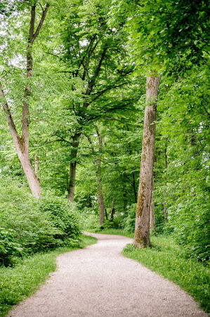 trailway: Beautiful road through the summer forest in austria