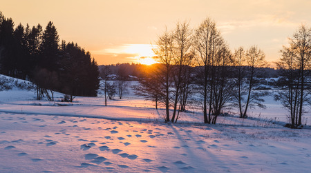 upper austria: winter forest at sunset taken in upper austria Stock Photo