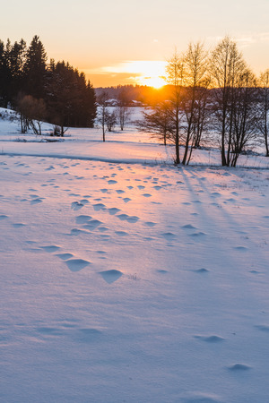 upper austria: meadow and trees at sunset taken in upper austria