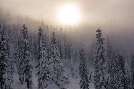 ridgeline: Hazy Sunset Over Layers of Snow Covered Trees in Mountain Forest