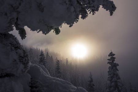 ridgeline: Foggy Mountain Forest Trees Layered with Hazy Sunset