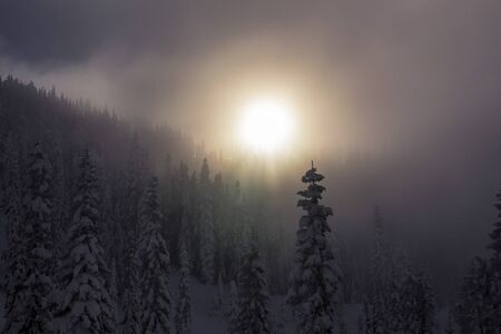 ridgeline: Late Hazy Sunset Through Fog Over Snowy Tree Tops in Mountain Forest
