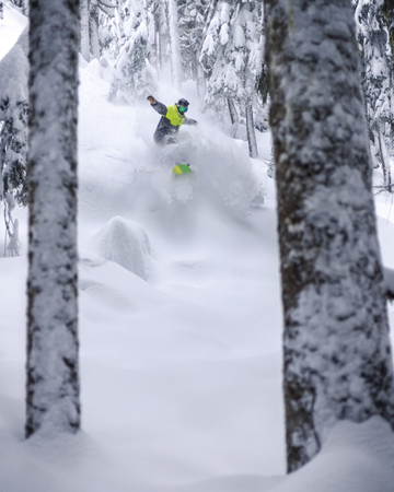Fresh freeride powder pillows in brightly lit forest