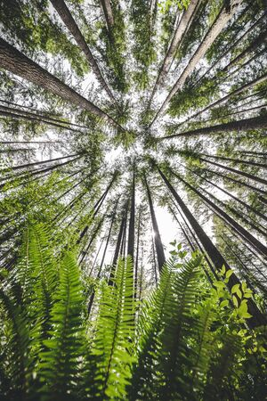 Spectacular environment scenery perspective revealing tall trees from below green plant branches 스톡 콘텐츠
