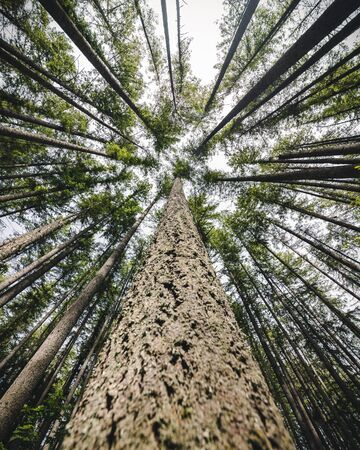 Moody nature scenery with abstract angle looking up at forest canopy