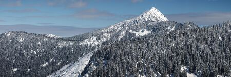 Epic winter wliderness panoramic background with with fresh snow on thick tree clusters and white summit