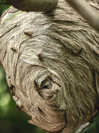 Extreme close up of large bee hive in tree branch