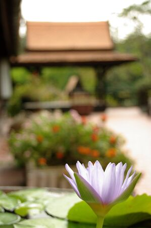 archetypal: a lotus flower in the foreground of an archetypal Thai roofline Stock Photo