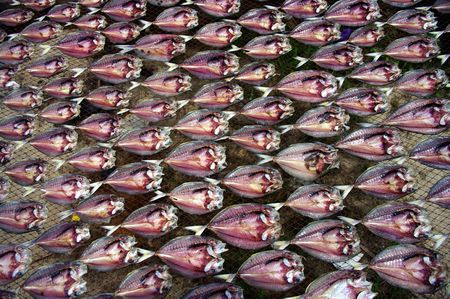 sundried: Fish being sundried on a net Stock Photo