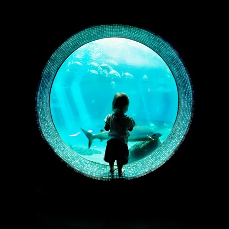 mesmerized: A child, dwarfed by the porthole window in which she is standing, is mesmerized by a passing shark. Stock Photo