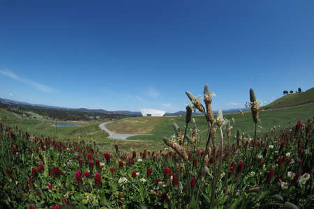 Canberra: Wildflowers covering an open area of the National Arboretum in Canberra, Australia