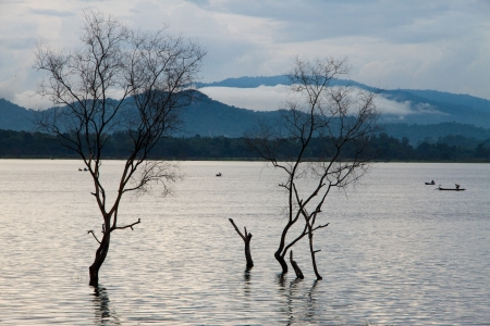Dead trees in the reservoir and blue mountain Stock Photo - 16577426