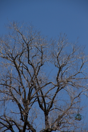 Dead trees and Bird cage with blue sky