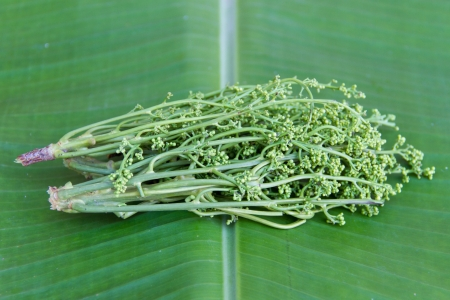 neem: Neem on green banana leaves Stock Photo