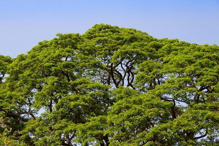 Green tree and blue sky photo