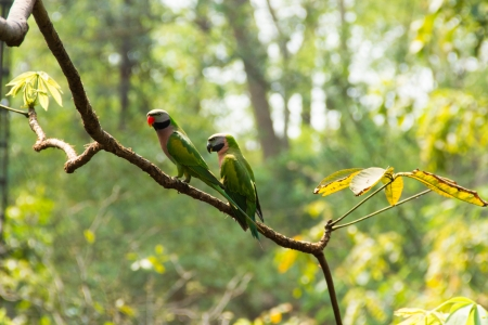 Two parrots on a branch in the forest photo