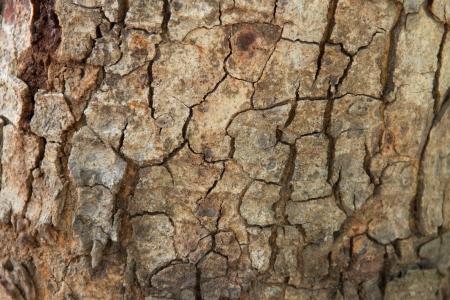 Bark of Padauk Tree Seamless Tileable Texture Stock Photo