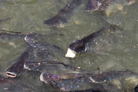 Many iridescent shark eat Bread photo