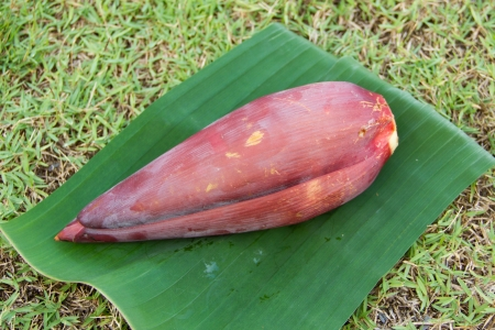 Banana blossom on banana leaves photo
