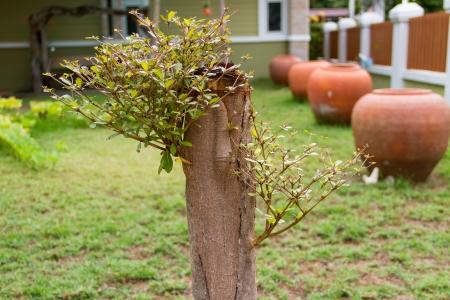裏庭で発芽の切り株