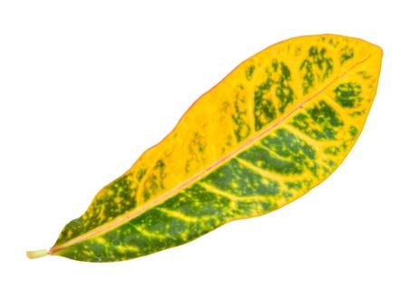 Leaf idea isolated on white background