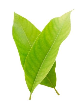 Leaf idea isolated on white background photo