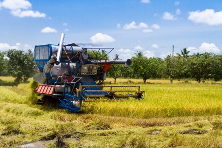 reaping: Combine harvesters were reaping