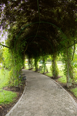 Tree tunnel in the park photo