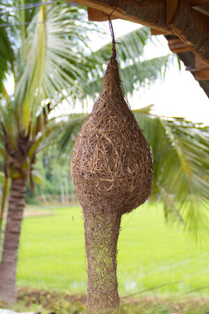 weaver bird nest: Weaverbird nest under the roof Stock Photo