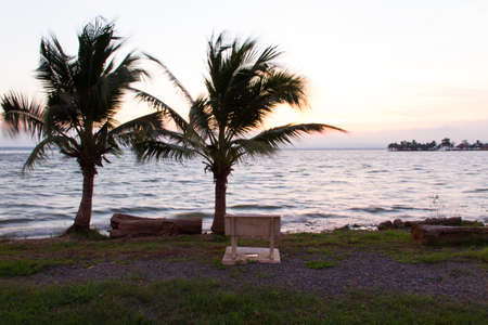 Dual coconut tree along the reservoir at dawn photo