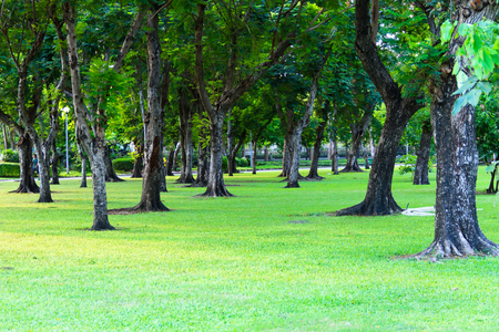 lumpini: green park in city Bangkok Thailand
