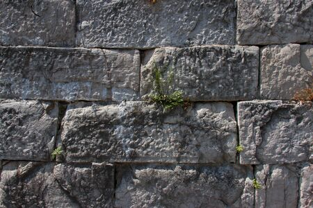 was: grass was born on a brick wall.