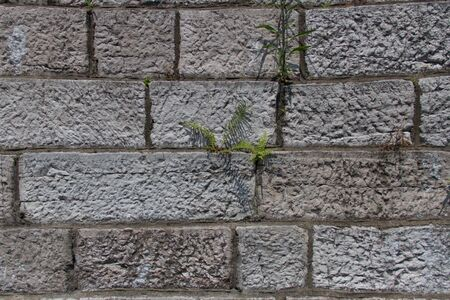 front house: grass was born on a brick wall.