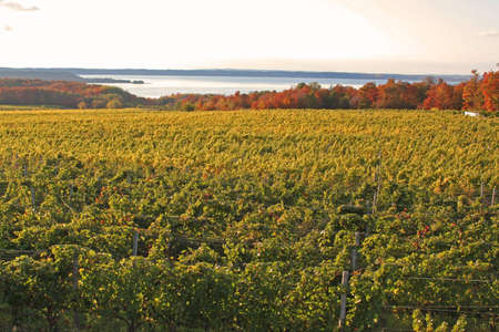 Michigan vineyard