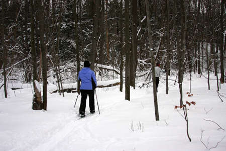 cross country: Esquiadores de esqu� de fondo Foto de archivo