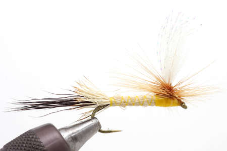 freshwater: Freshwater fly for fishing