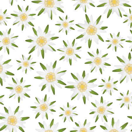 seamless isolated edelweiss flower background , symbol for german Oktoberfest and alps Vector Illustration