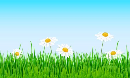 vector background template file of seamless panorama green summer grass on lower side with daisies for summer or spring designs