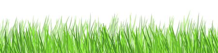 eps vector background template file of seamless panorama green summer grass on lower side for summer or spring designs Иллюстрация